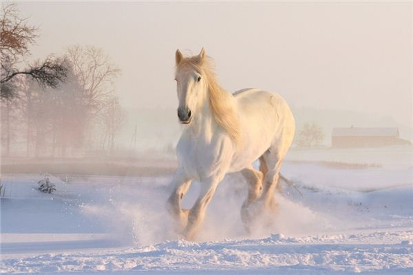 La signification et la divination du rêve du marchand de chevaux