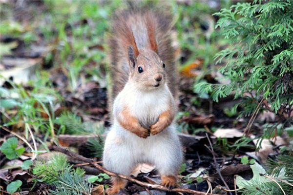 La signification de rêver d'écureuil